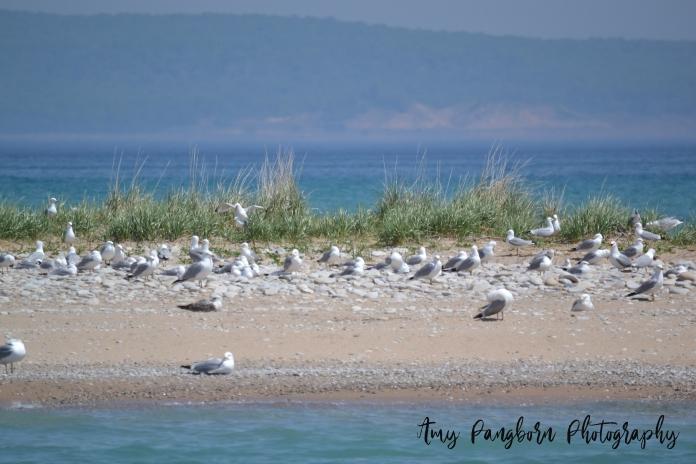 Seagull Life